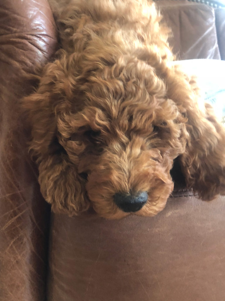Treasure-family-doodles-dogs(11)